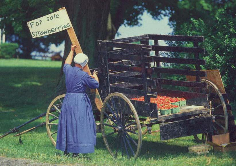 Old Order Amish In Holmes County