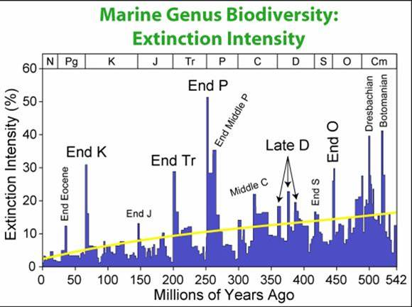 mass extinction and its effect on evolution Surprising research has shown that mass extinctions, despite being, well, mass  extinctions, may actually have a positive effect on evolution  in research  published in the journal plos one, scientists from the university of.