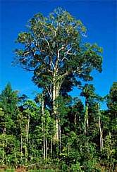 deforestation extinction of species conclusion Ending forest clearance would not save some species from the effects of decades of destruction, scientists find (from the guardian.