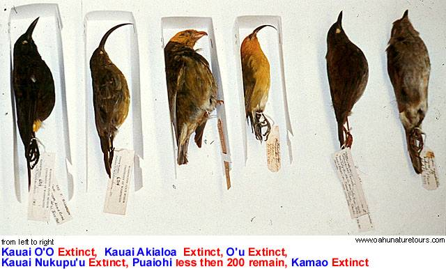humans effect on extinction Impacts of extinction humans: the extinction of this one species alone will not affect humans greatly, however if we keep allowing more and more species to die off because of our current lifestyles it will come back to haunt us.