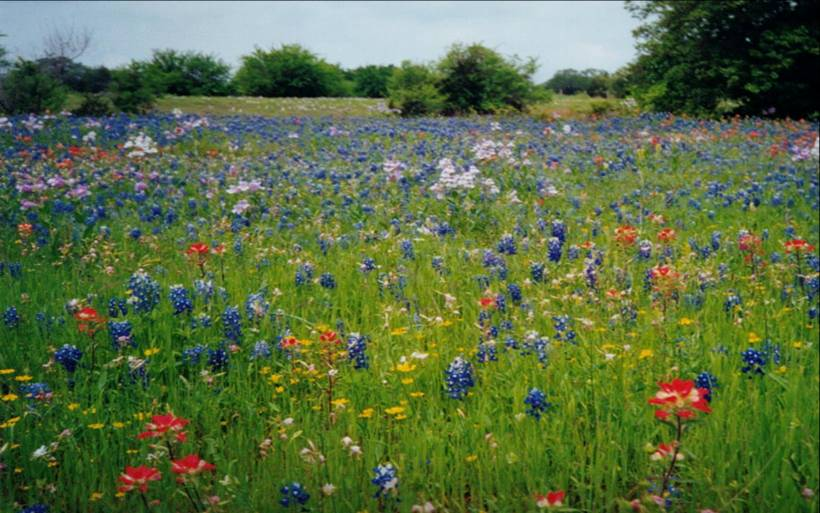 what is aesthetic value of biodiversity