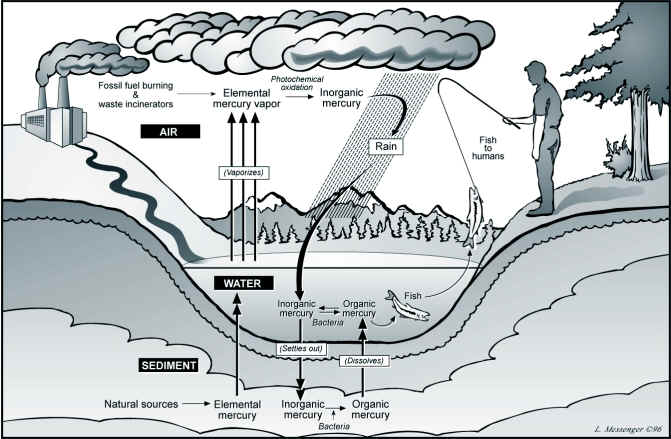 Mercury Cycle into rivers